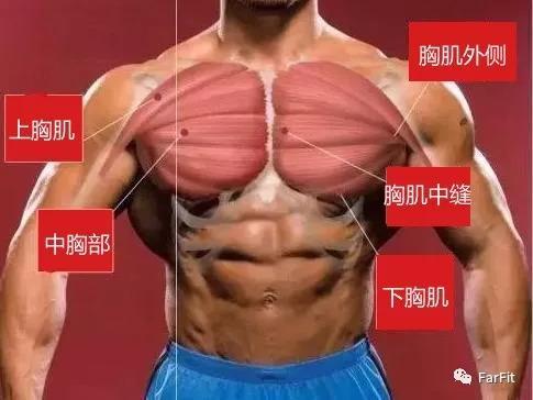 找到胸肌的发力感很重要!5个动作练一组就可让胸肌找到发力感!