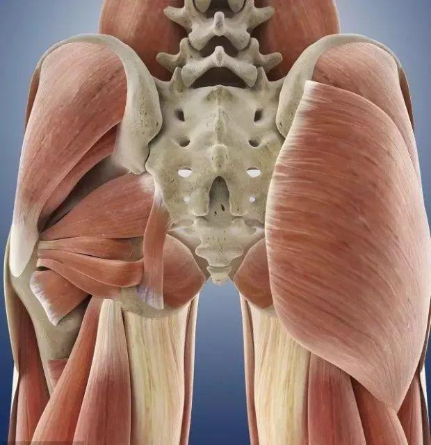 臀部如何塑形?六个动作轰炸臀部,让臀部更翘!