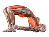 瑜伽后弯练习有助于预防腰椎病