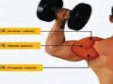 三角肌中束如何练大,这2个简单哑铃帮你训练