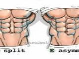 你的腹肌是哪种形态?据说95%的人都是 F~