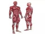 体能 | 跑步必做的11个身体素质训练
