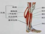 肌肉紧张显小腿粗,小腿拉伸图解告别疙瘩腿