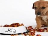 狗狗挑食没营养怎么办,狗狗营养膏来救场