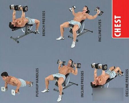 详细图解!哑铃的正确锻炼方法