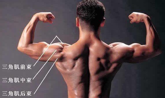 三角肌锻炼方法 在家也能够练出完美虎头肌